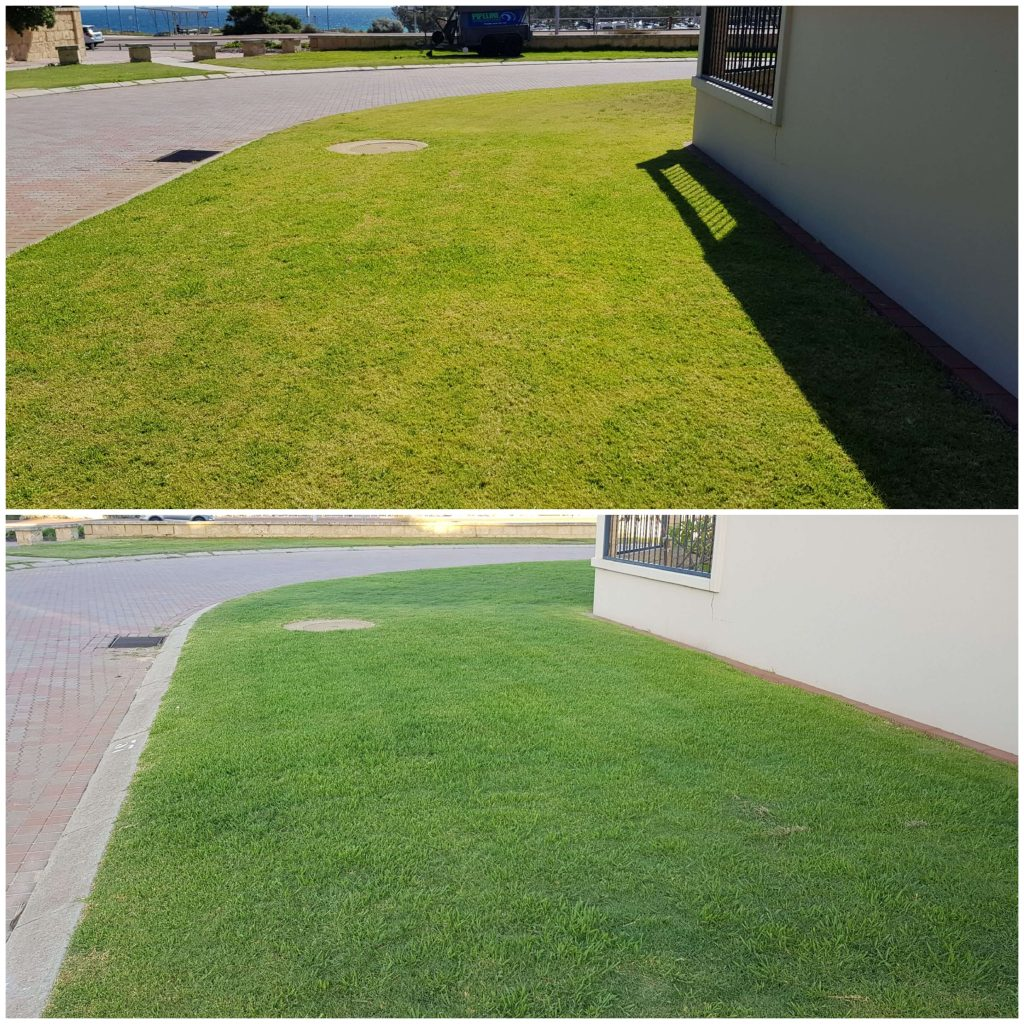 Lawn Before & After
