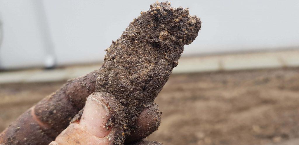 Jacinta Soil 1